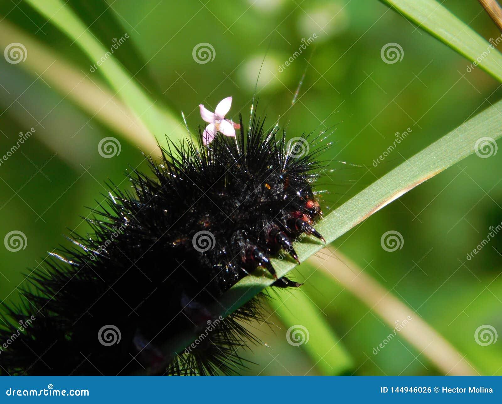 与一朵小的花的俏丽的毛虫在它顶头库存照片 图片包括有