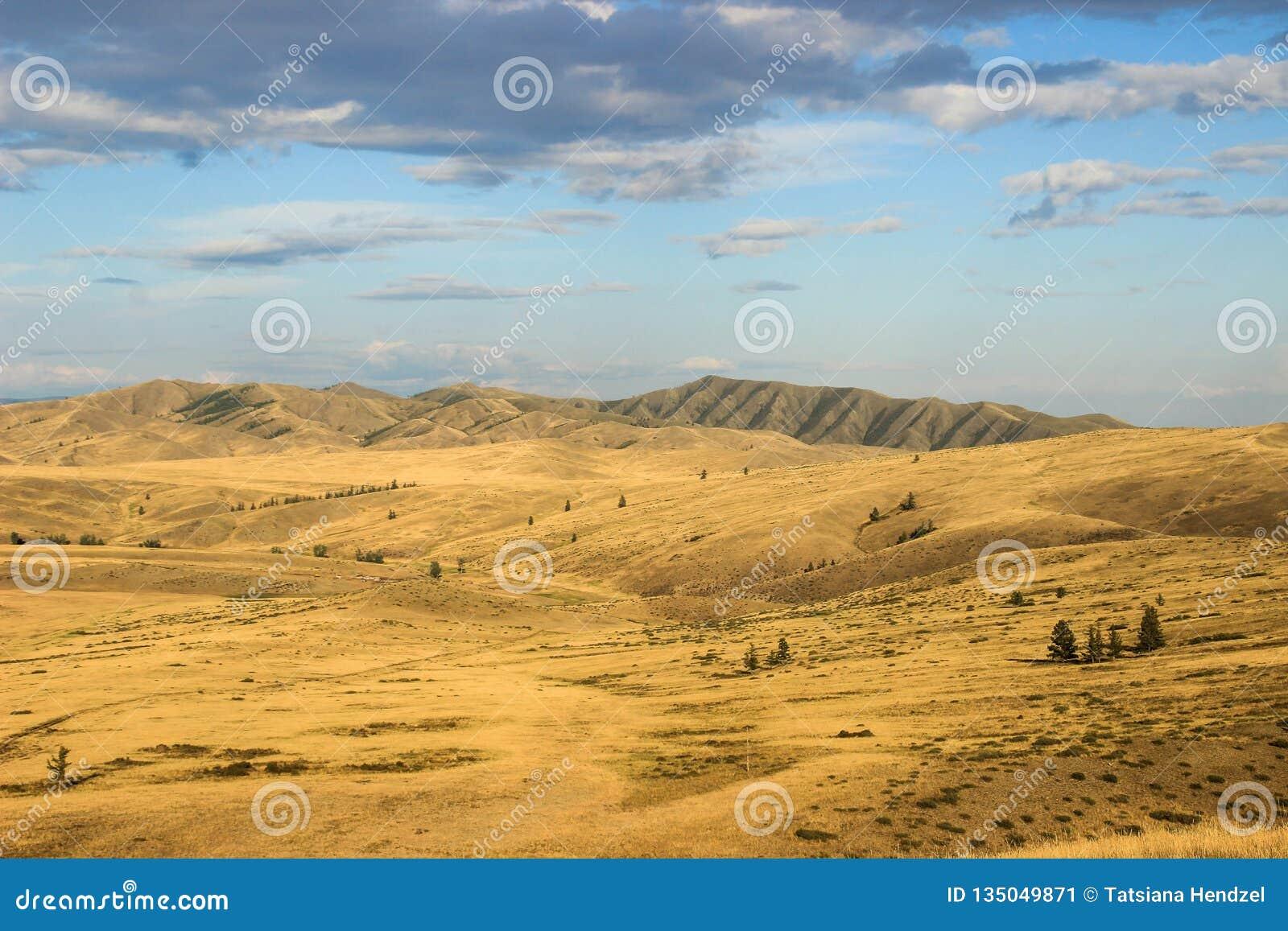 与上升在距离的山的美丽的干燥蒙古干草原
