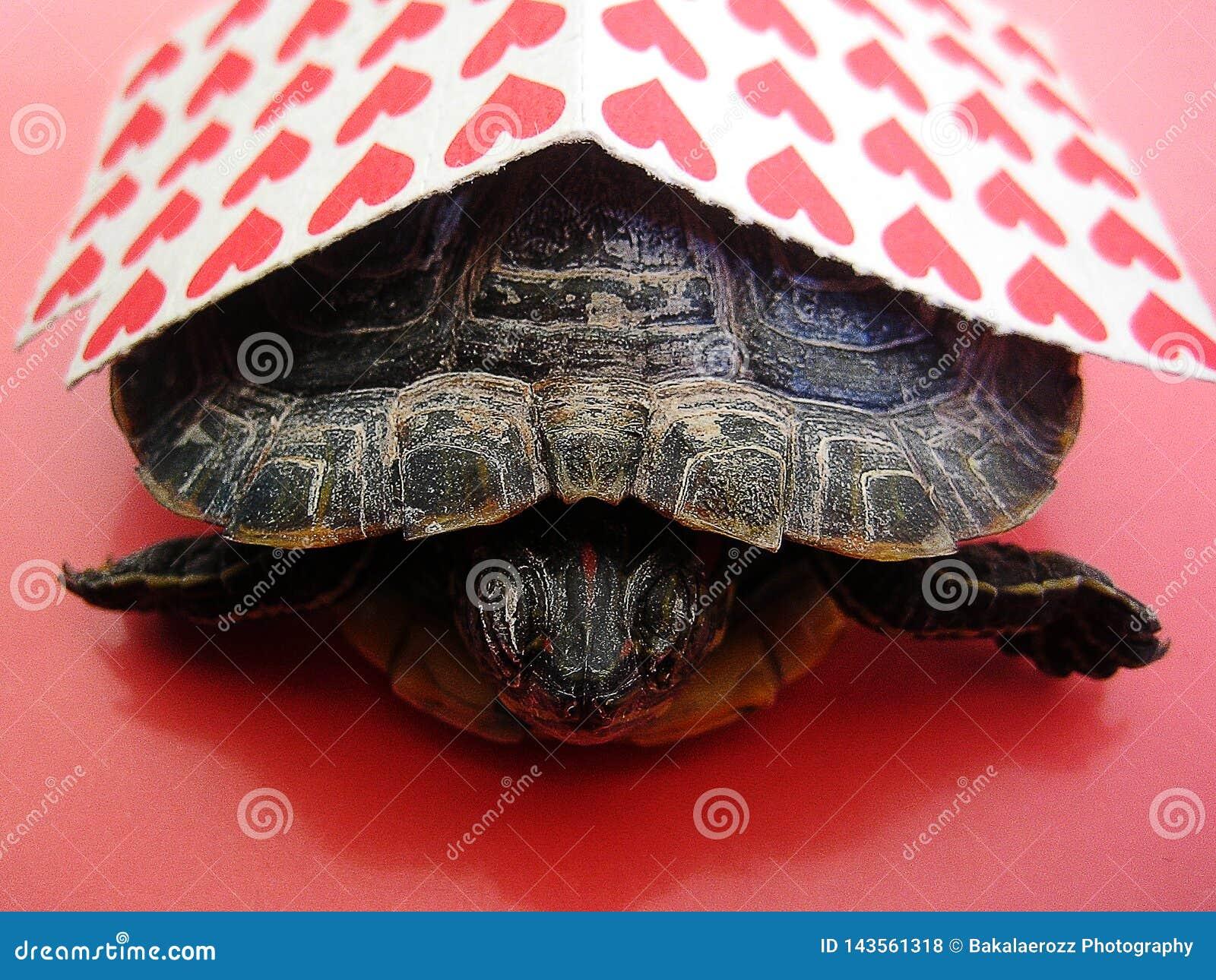 与乌龟背景宏观墙纸小字的Lsd小红色棍子纸