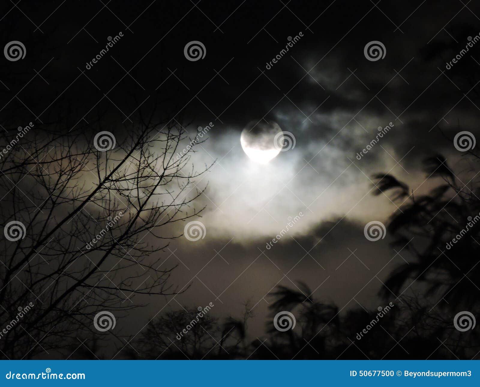 Download 与云层辗压的满月 库存照片. 图片 包括有 云彩, 杉木, 充分, 月亮, 结构树, 覆盖范围, 白兰地酒 - 50677500