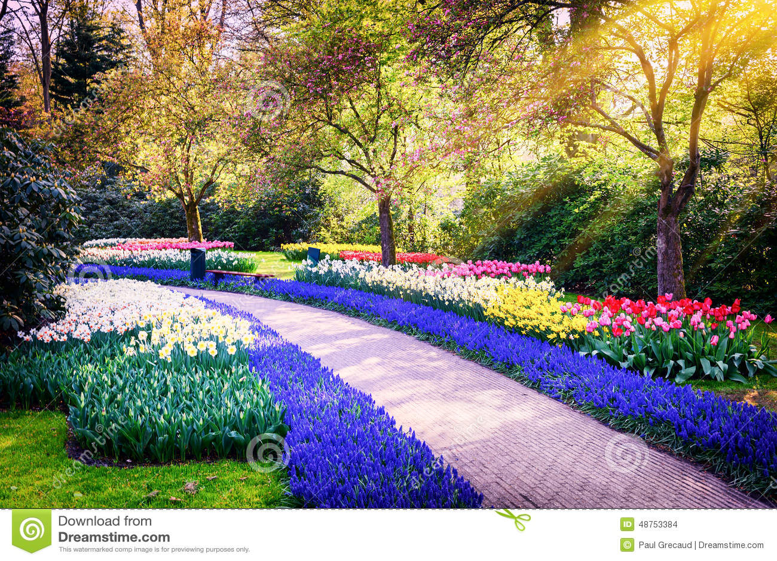 与五颜六色的花的春天风景