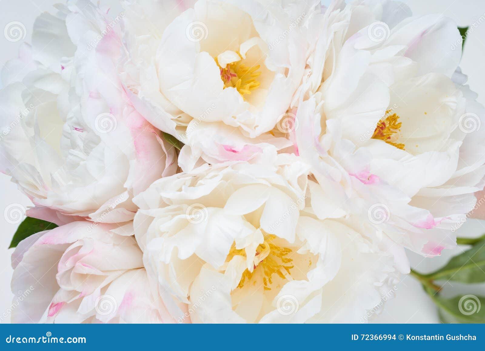 与五颜六色的花的美好的花卉背景…背景
