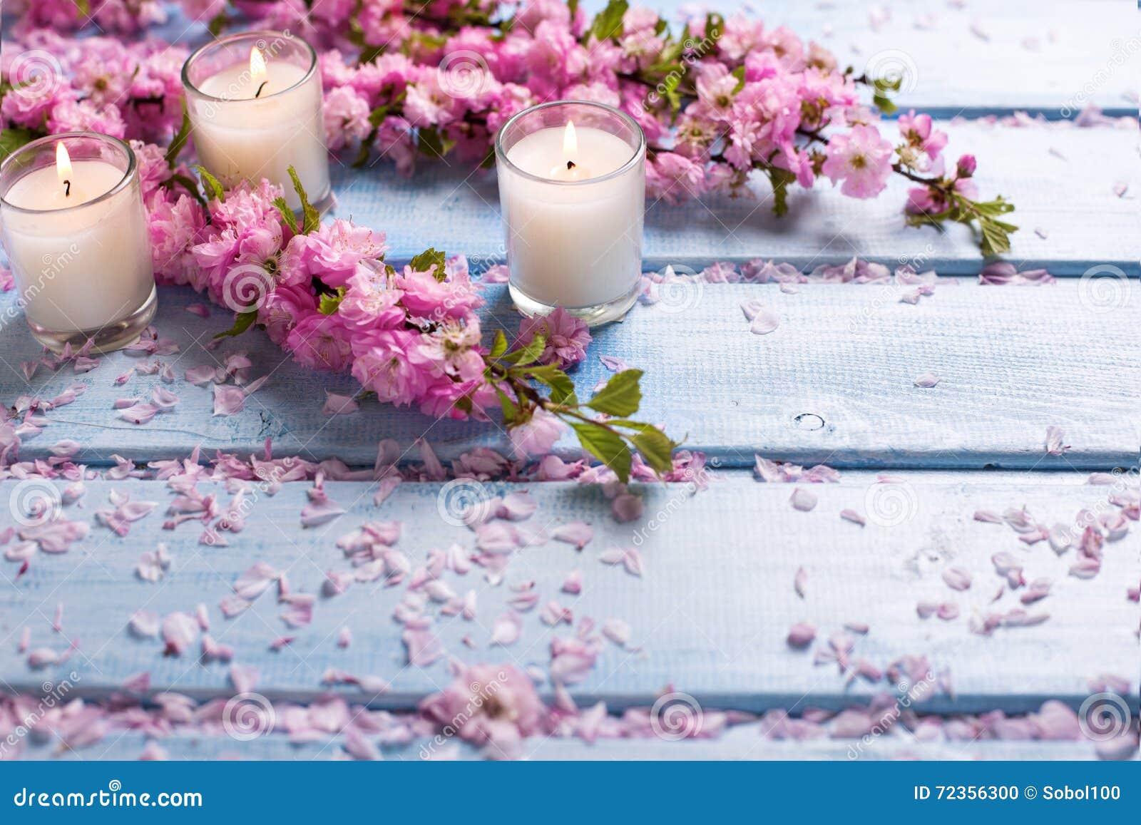 与佐仓桃红色的背景开花和在蓝色woode的蜡烛