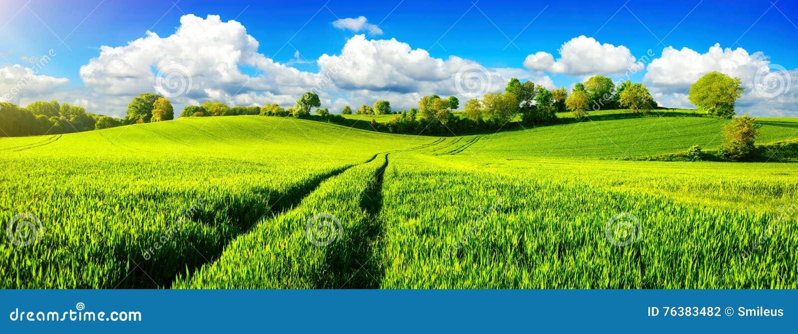 与充满活力的蓝天的田园诗绿色领域
