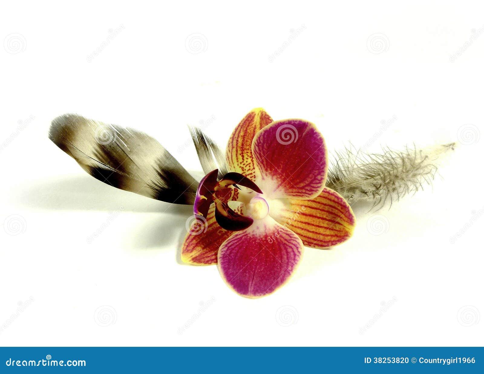 与兰花开花的羽毛