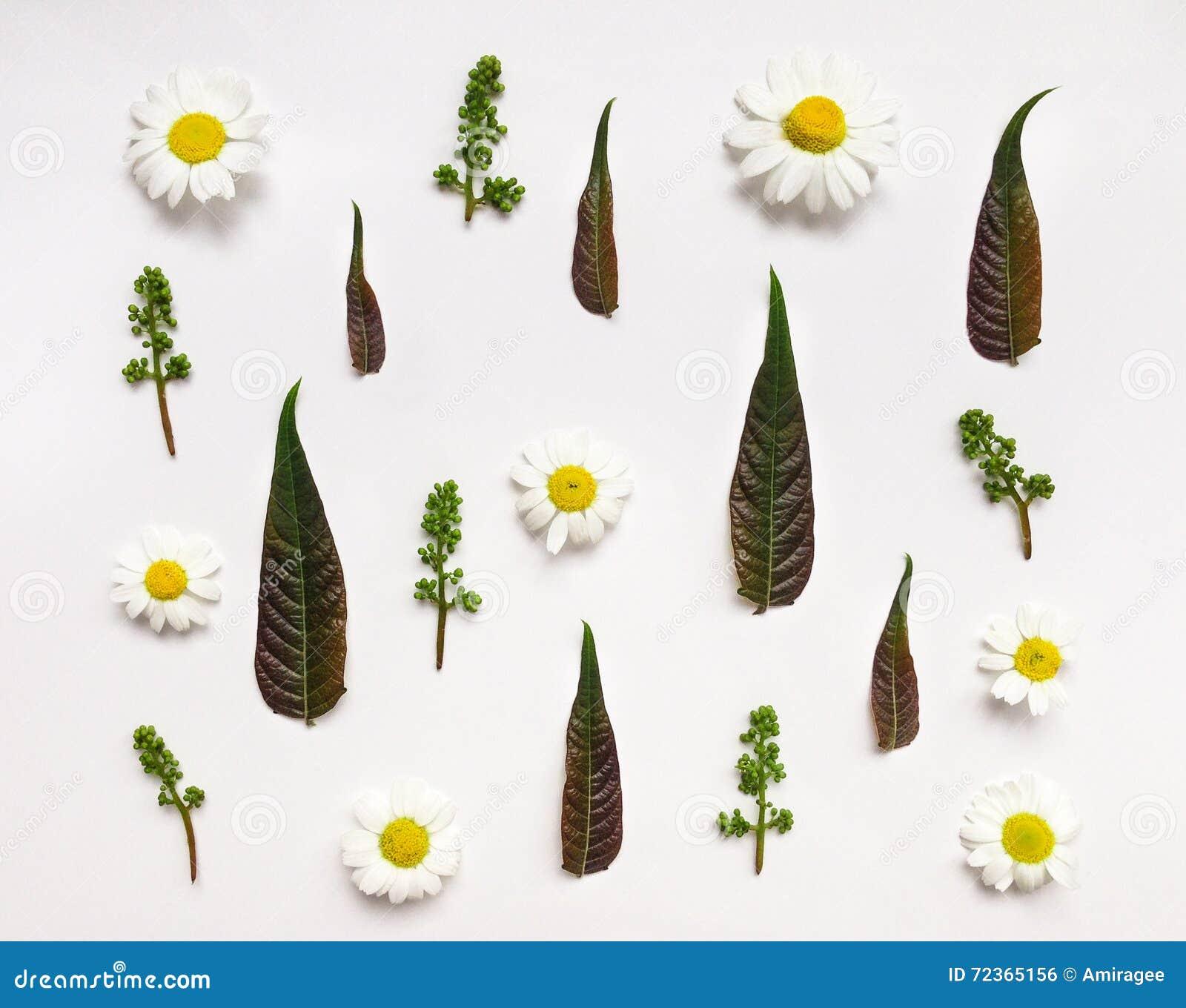 与叶子和花的五颜六色的夏天样式
