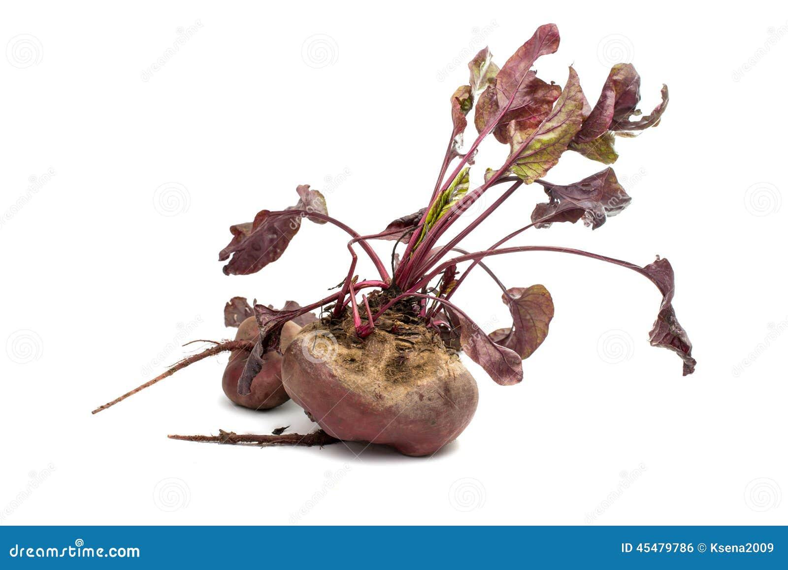 与叶子的红色甜菜在白色