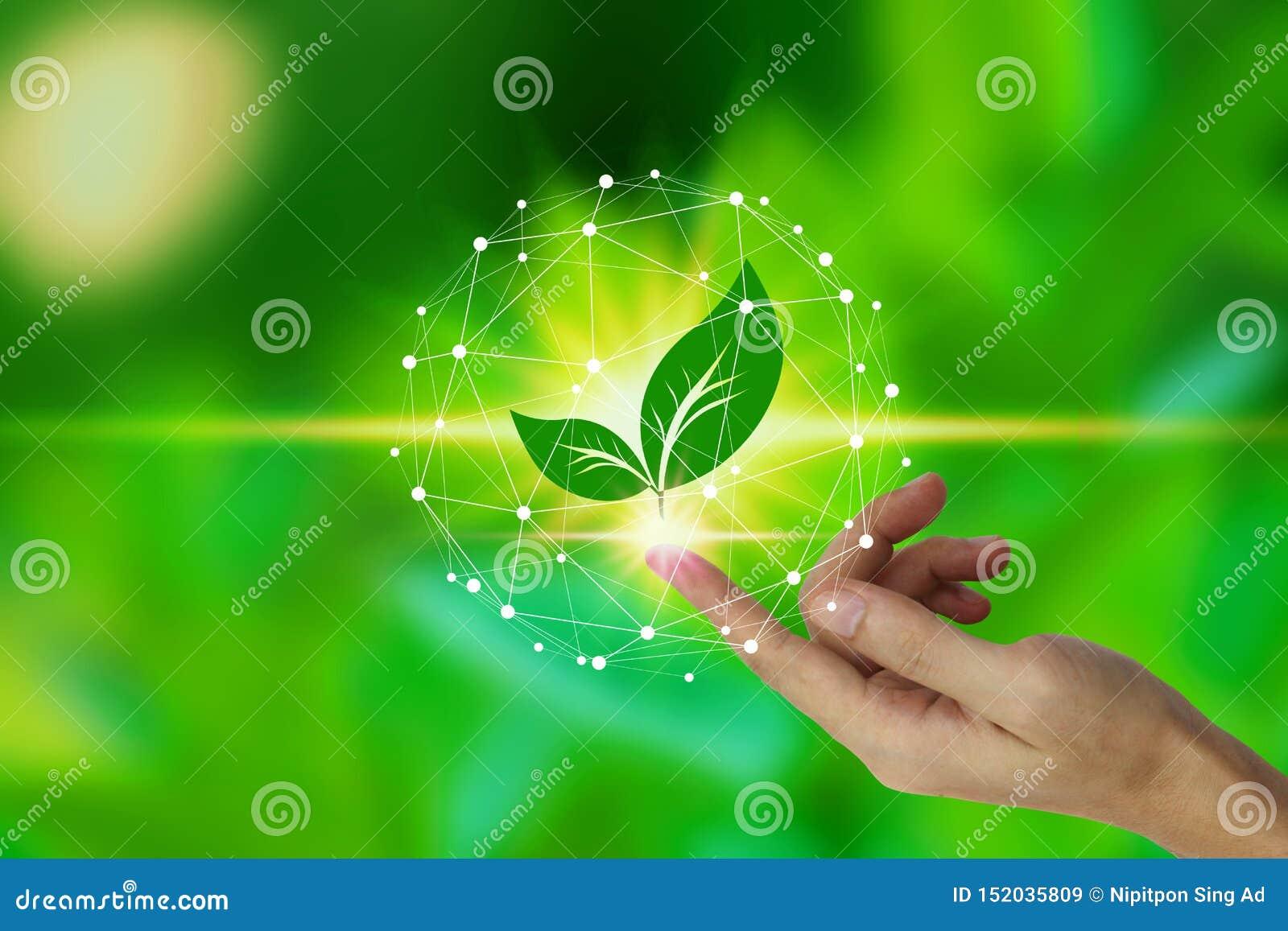 与叶子象的手指接触在自然背景,技术生态概念的网络连接 r