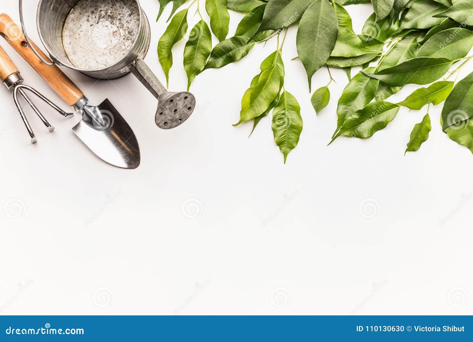 与园艺工具和绿色束的喷壶枝杈和叶子在白色书桌背景