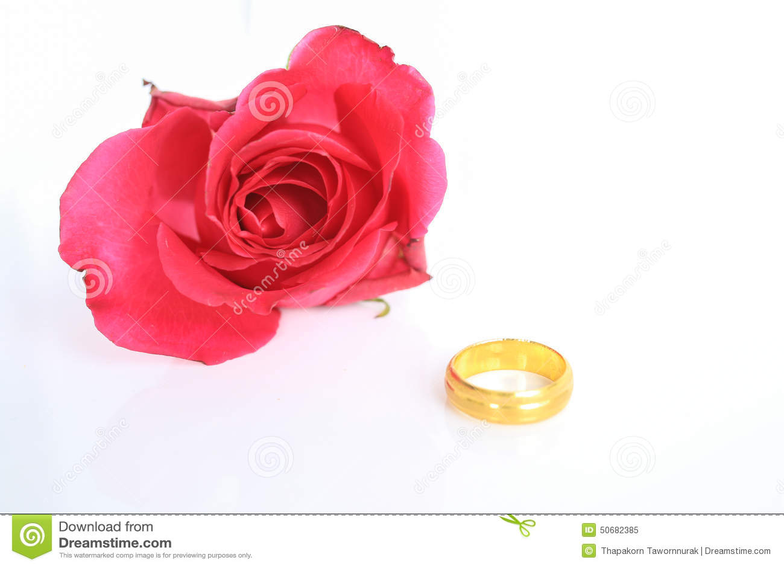 Download 与圆环的红色玫瑰在白色背景 库存图片. 图片 包括有 结婚, 珠宝, 婚礼, 金子, 蜜月, 花卉, beauvoir - 50682385