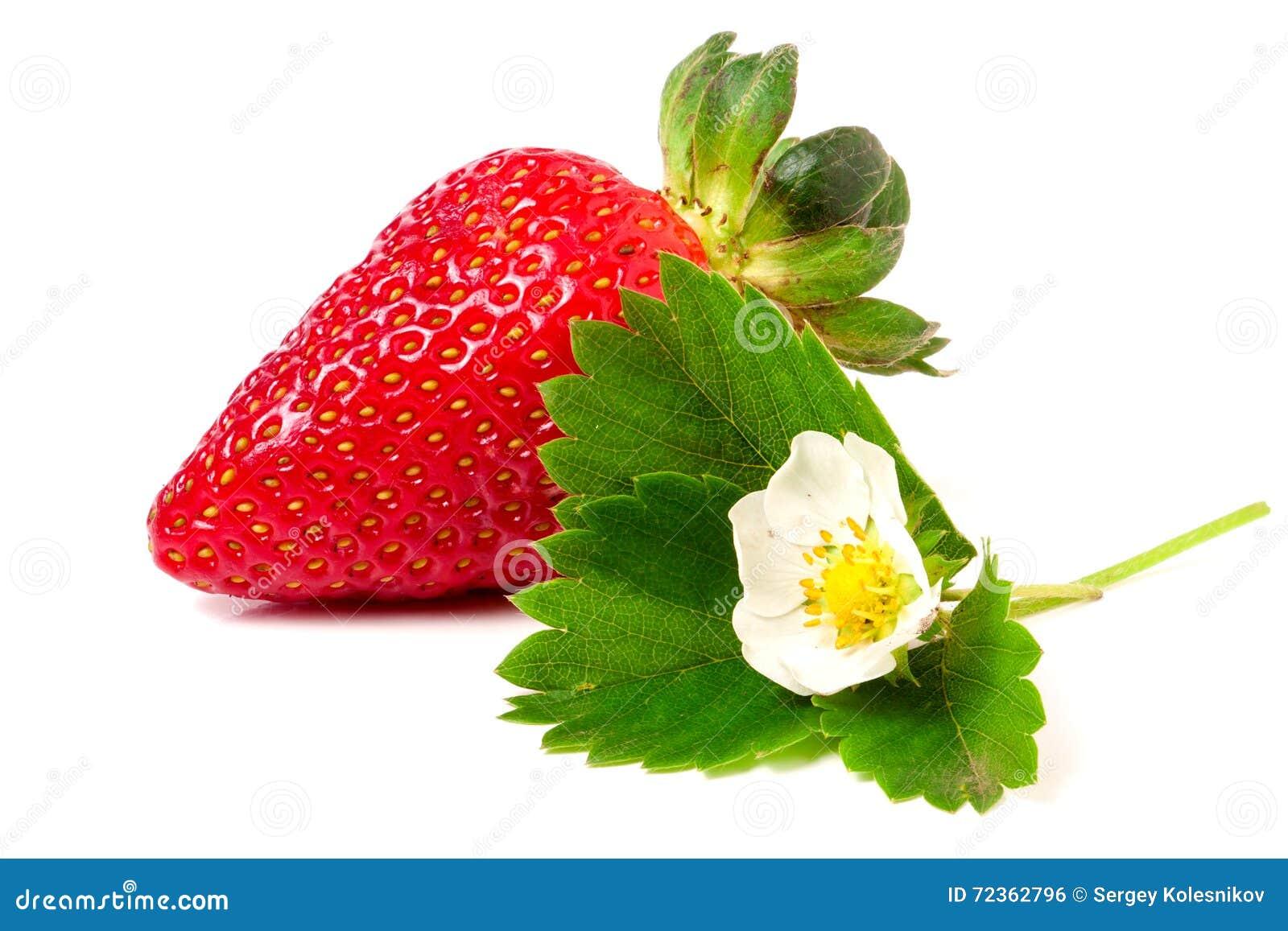 与在白色背景和叶子的草莓隔绝的花