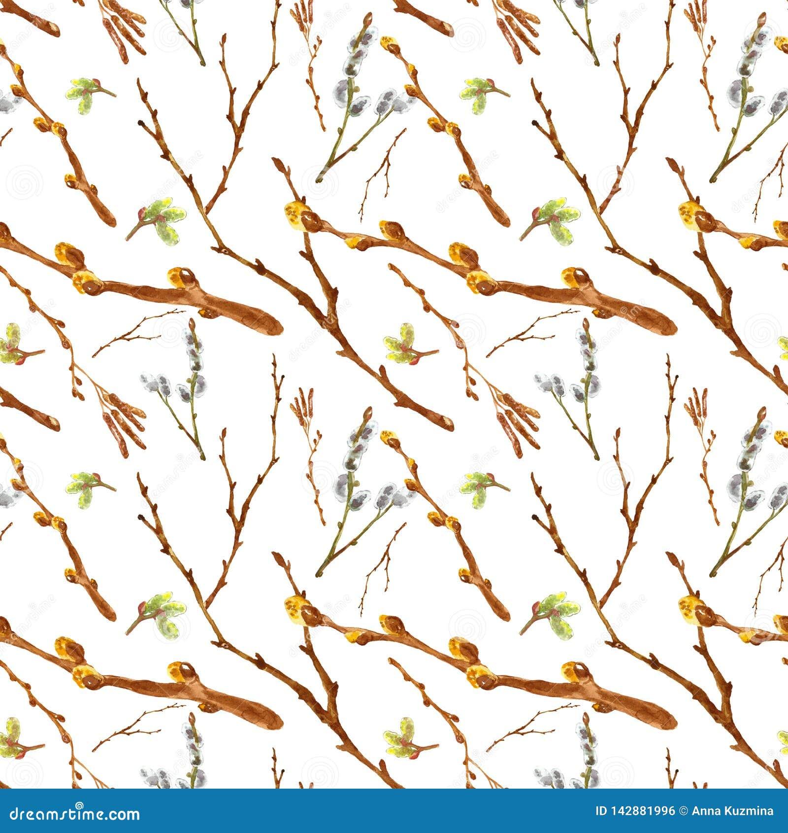 与在白色背景和树枝的水彩春天无缝的样式隔绝的褪色柳枝杈