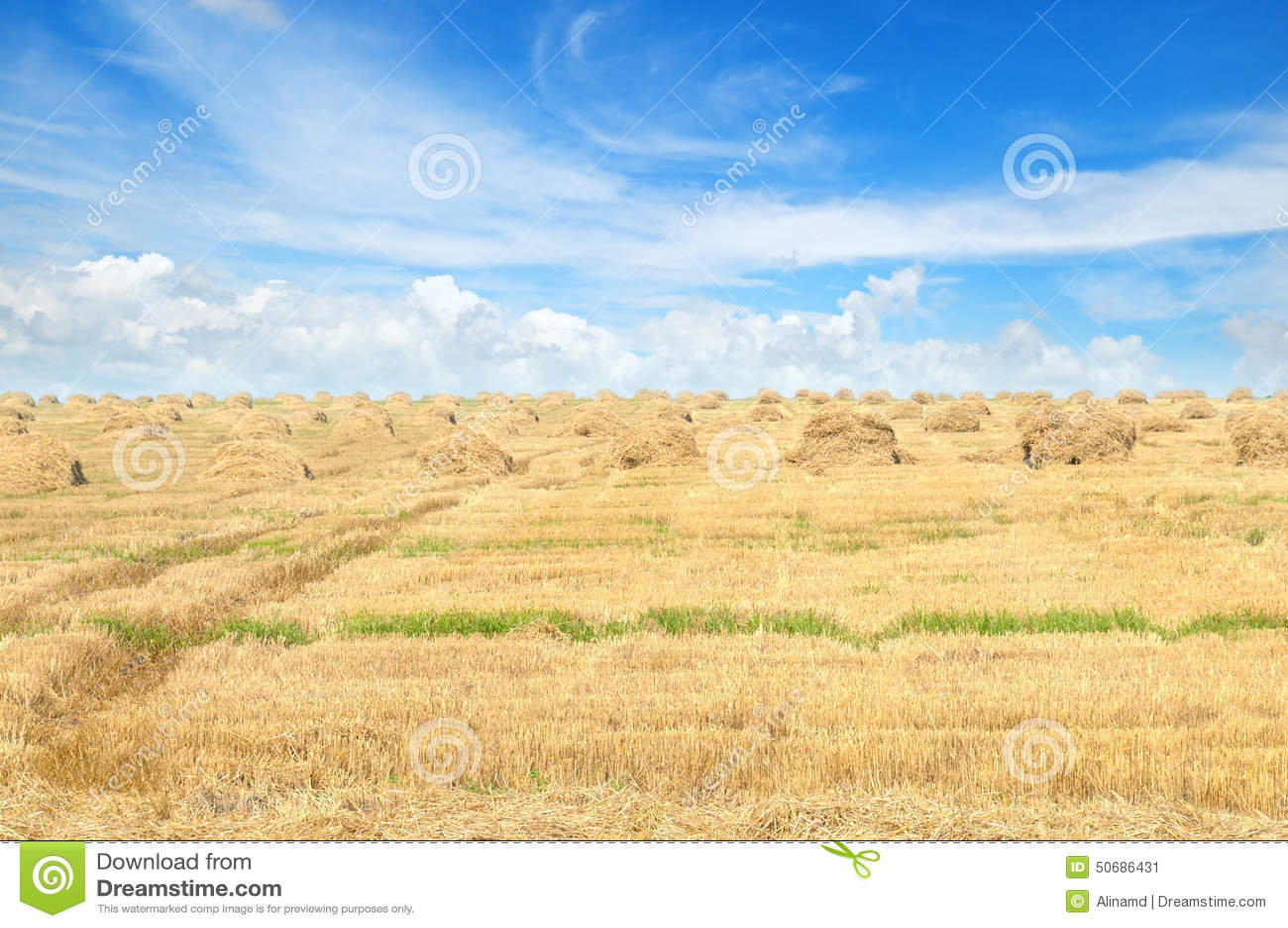 Download 与堆的领域秸杆和天空 库存图片. 图片 包括有 庄稼, 颜色, 乡下, 收获, 干草, 玉米, 金子, 地产 - 50686431