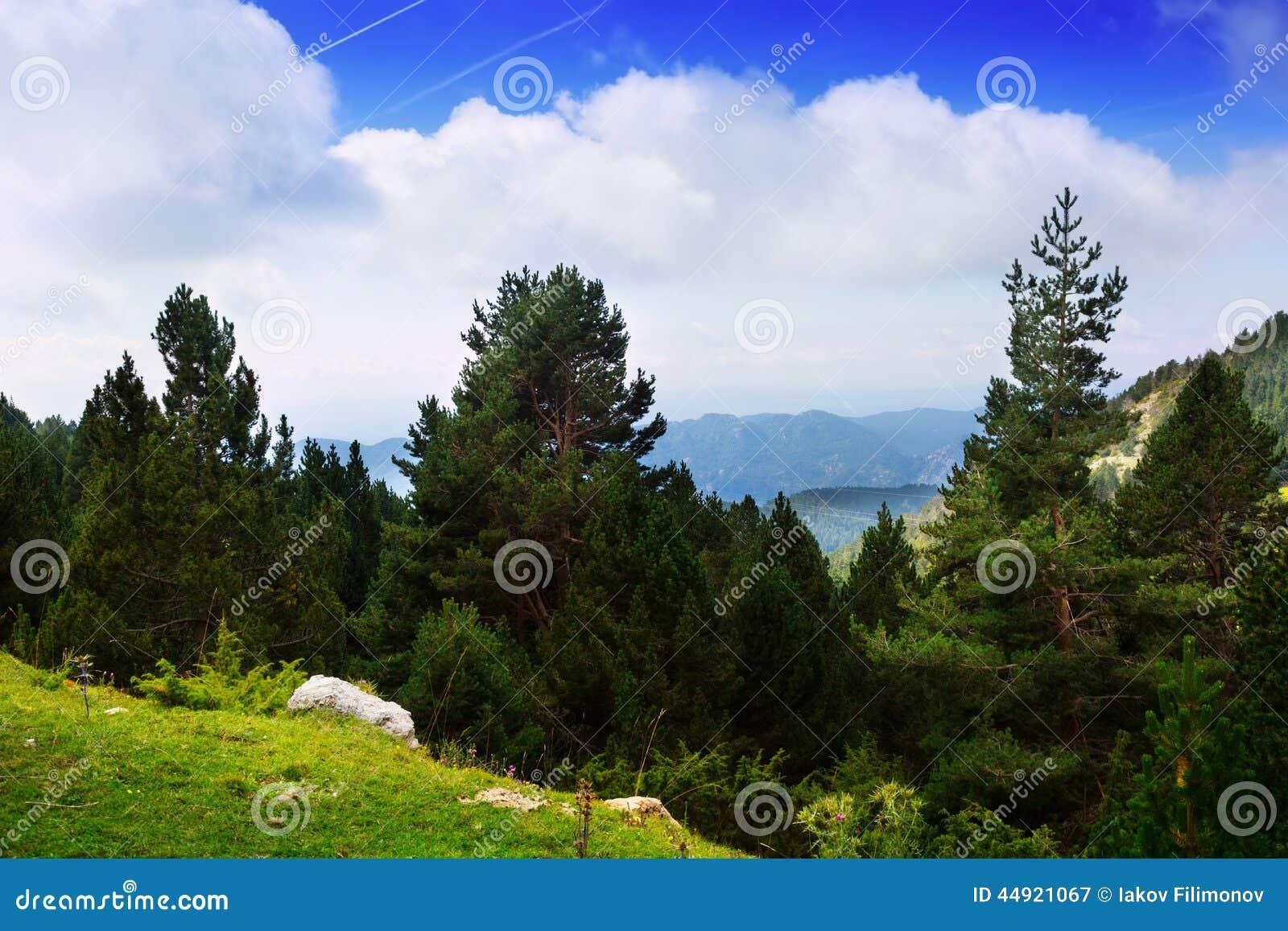 与多山森林和杉树的夏天风景 比利牛斯.图片