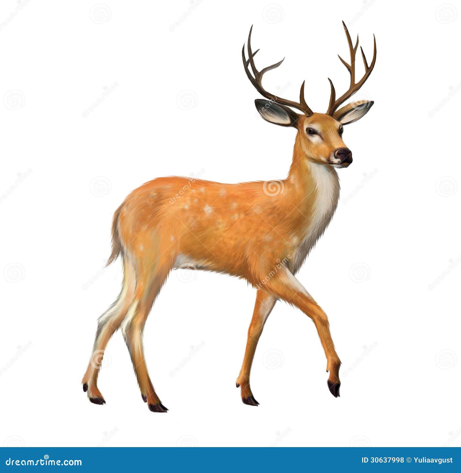 与大垫铁的美丽的鹿