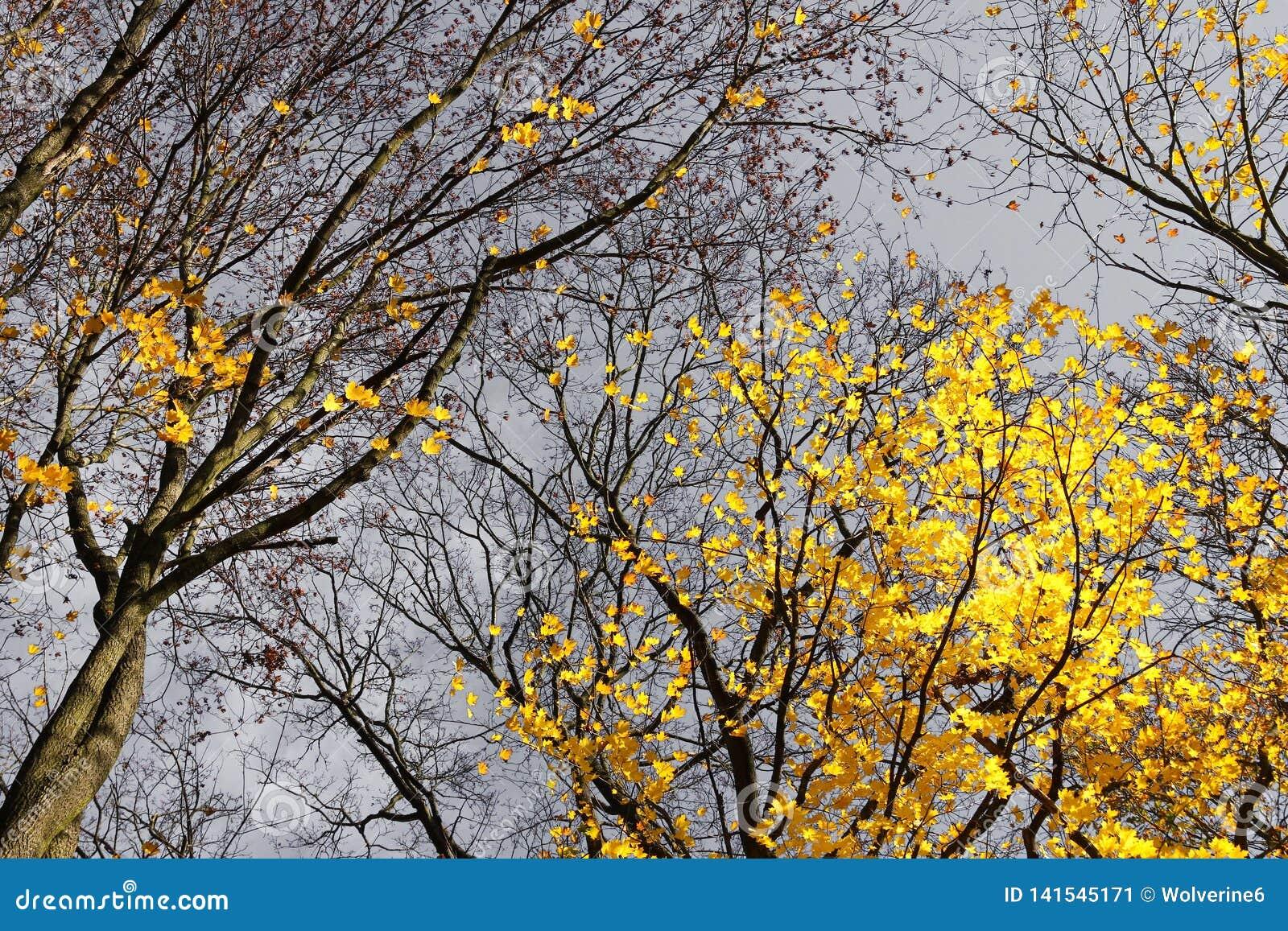 与它五颜六色的树的秋天自然