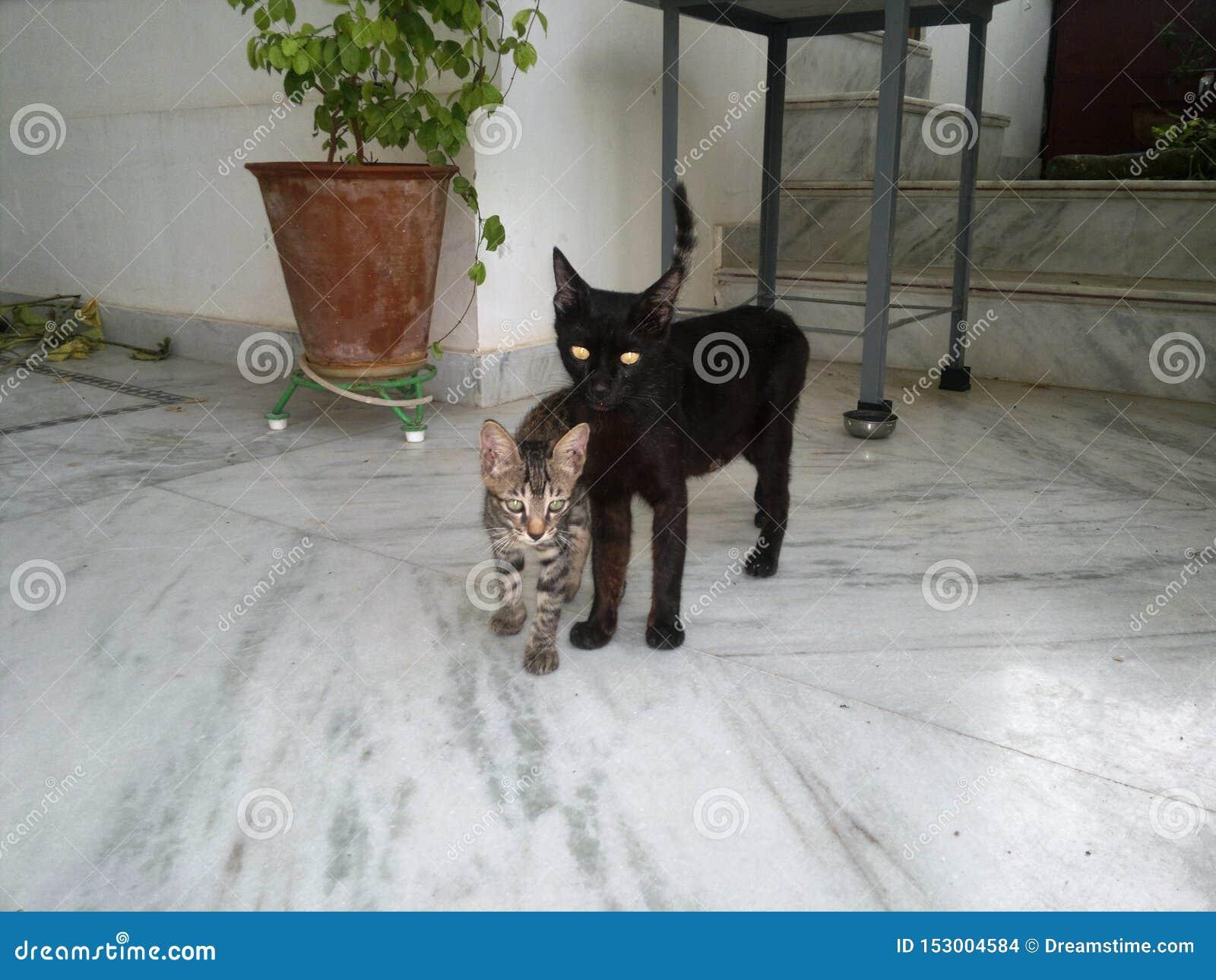 与小猫的母亲猫