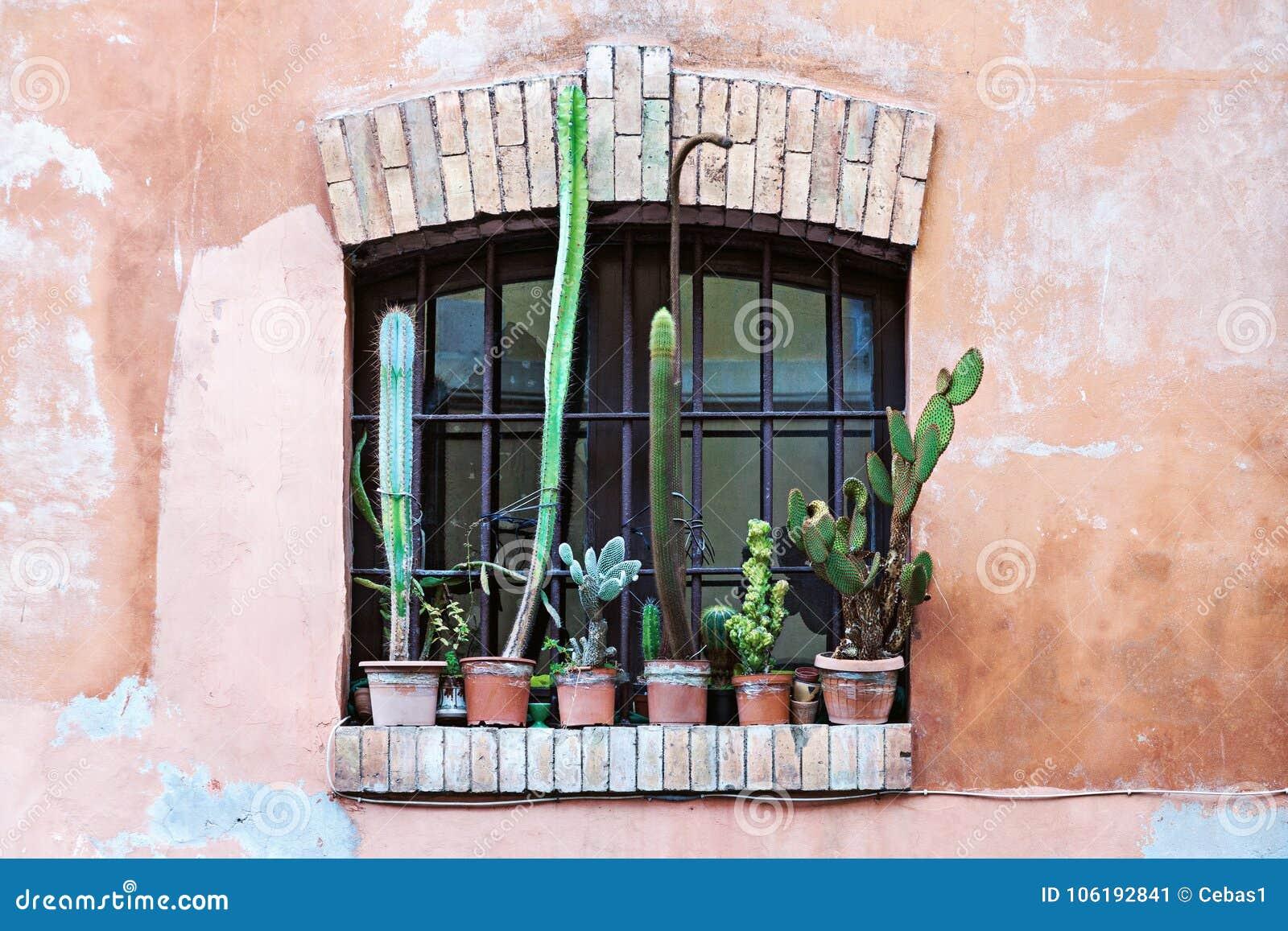 与小组的老窗口仙人掌花盆