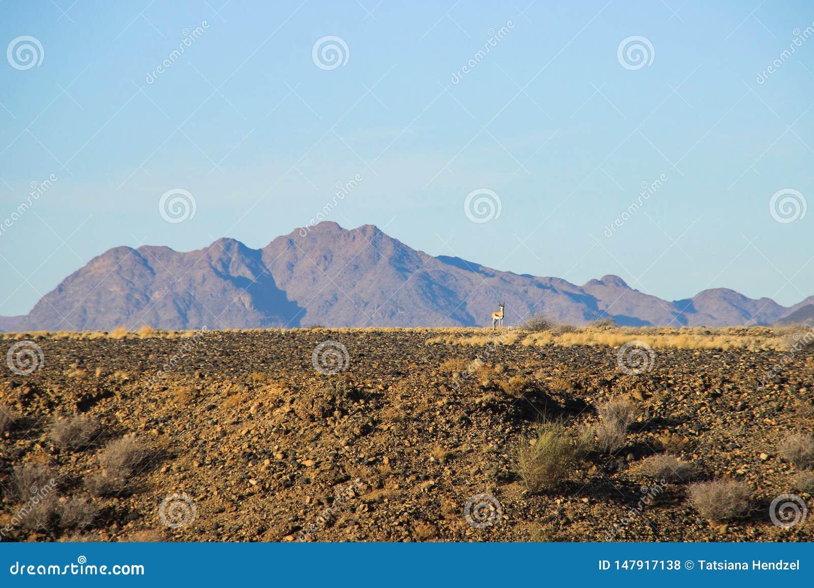 与山的沙漠风景在纳米比亚和两只不显眼的黄色鸟南部  ??