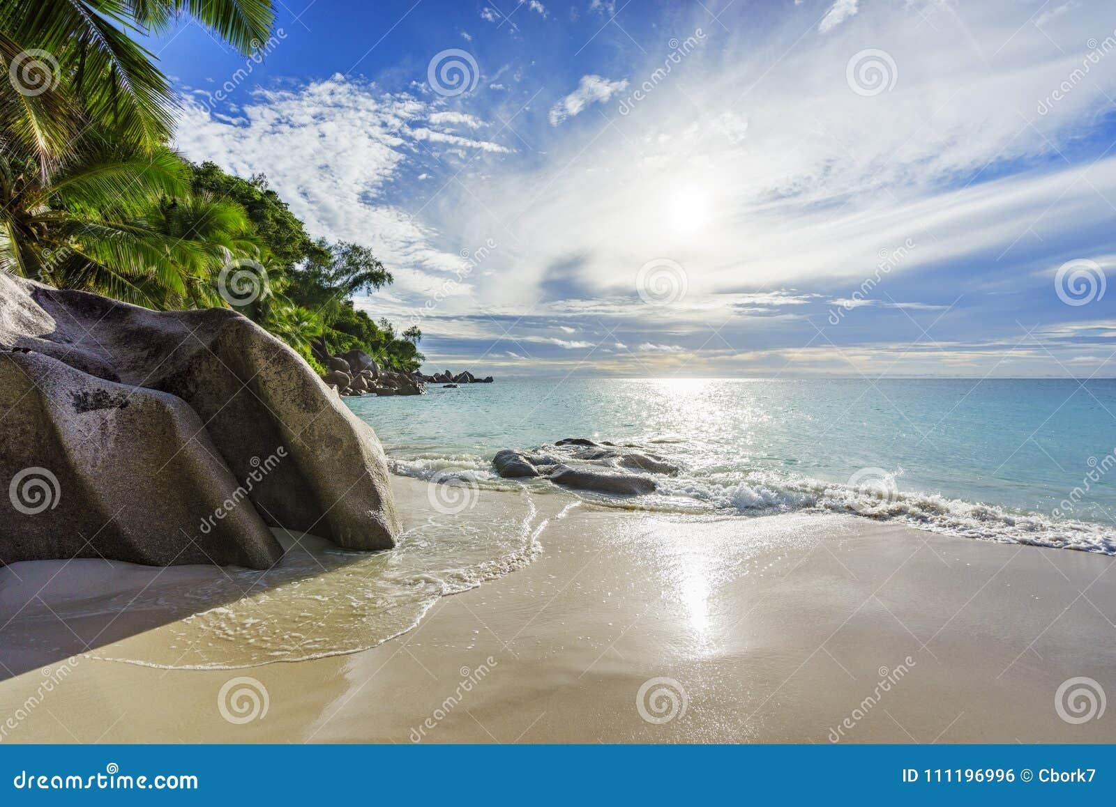 与岩石、棕榈树和绿松石wate的天堂热带海滩