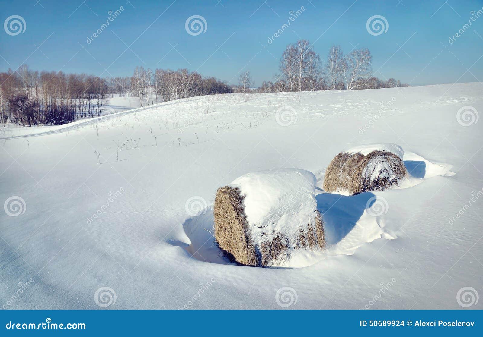 Download 与干草卷的美好的冬天风景 库存照片. 图片 包括有 本质, 视图, 晴朗, 农村, 国家(地区), 蓝色 - 50689924
