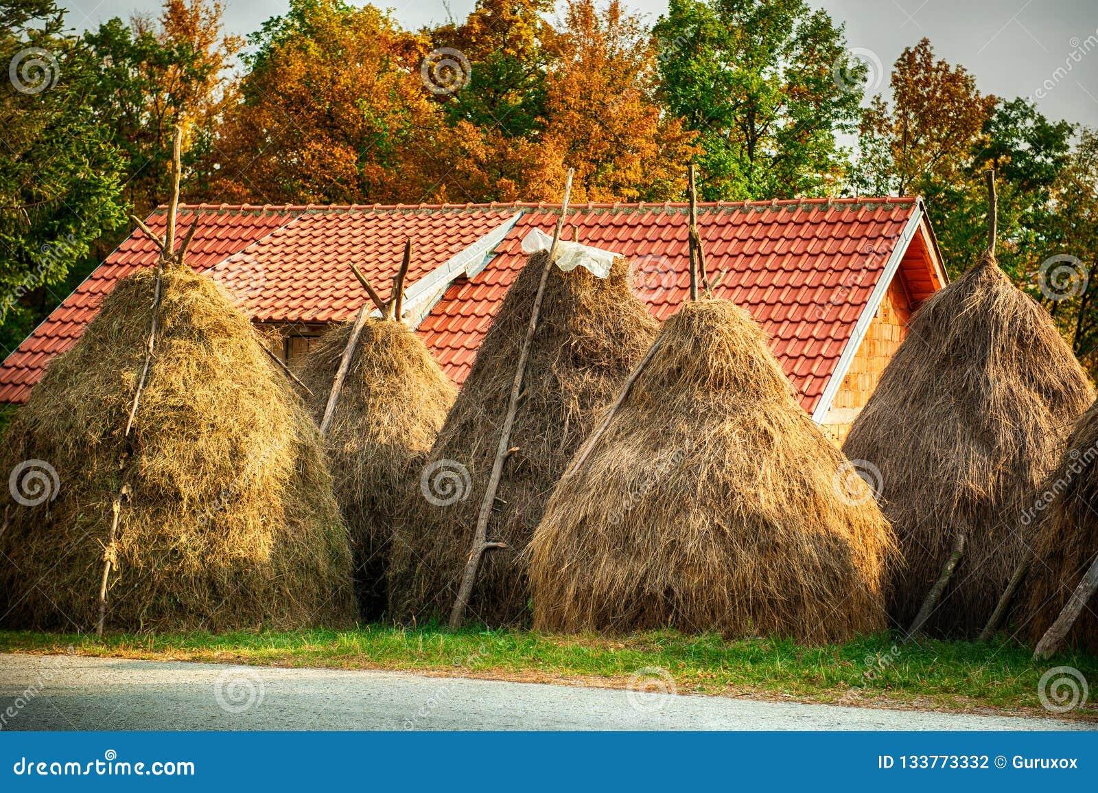 与干草堆的夏天农村风景在小村庄