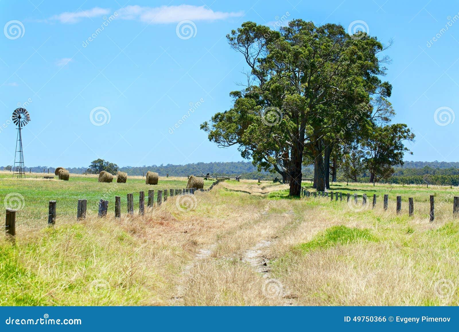 与干草堆的澳大利亚农村领域风景