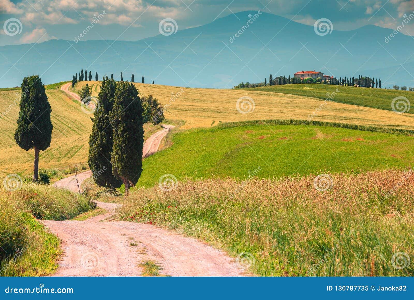 与弯曲的路和柏,意大利,欧洲的典型的托斯卡纳风景