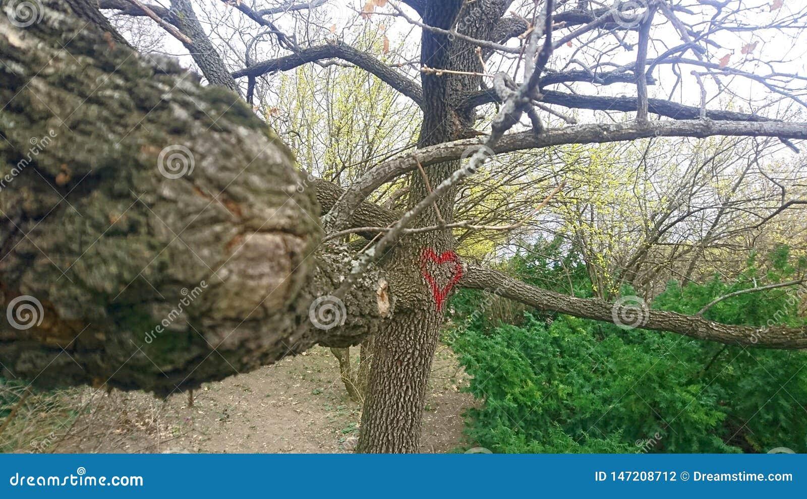 与心脏街道画的树在盖勒特小山,布达佩斯,匈牙利