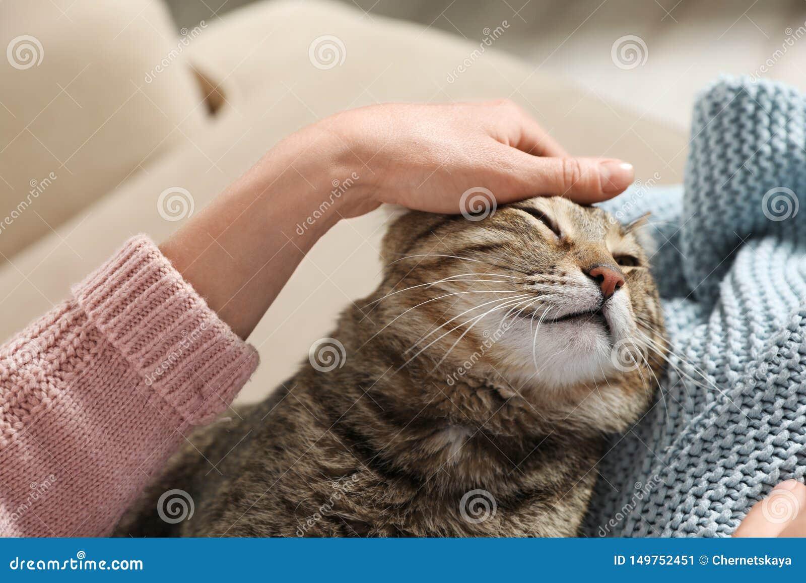 与所有者的逗人喜爱的虎斑猫在沙发 友好的宠物