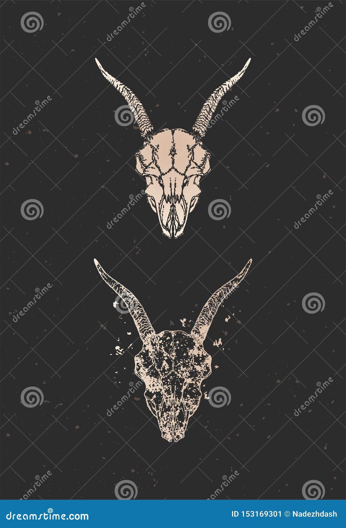 与手拉的山羊头骨两个变形的传染媒介例证在黑背景的 金子剪影和等高与难看的东西