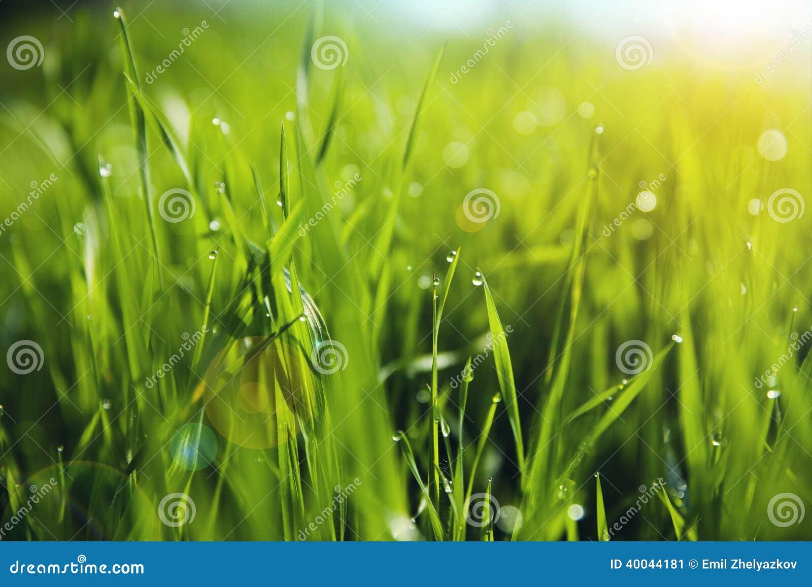 与早晨露滴的草