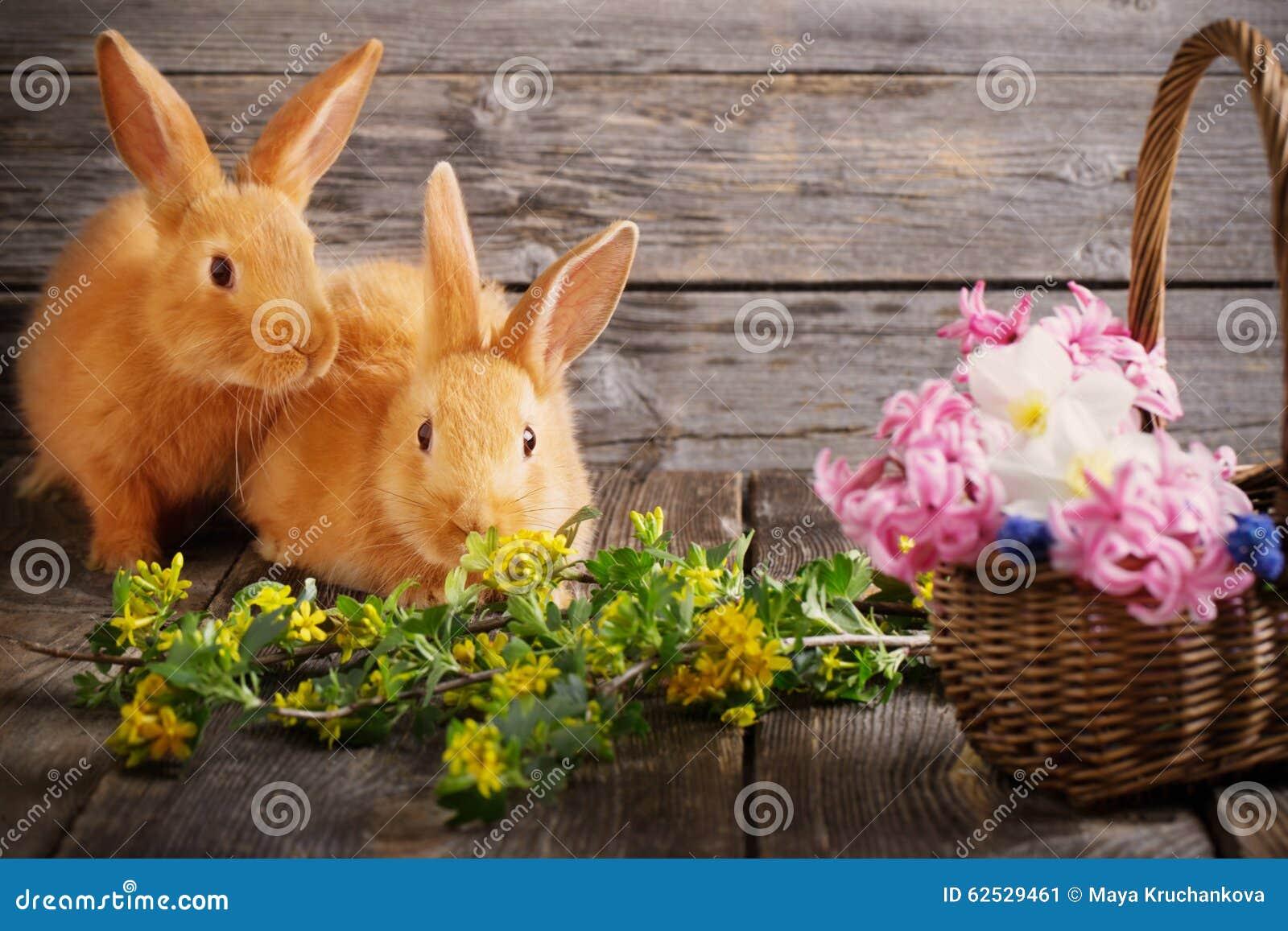 与春天花的兔子