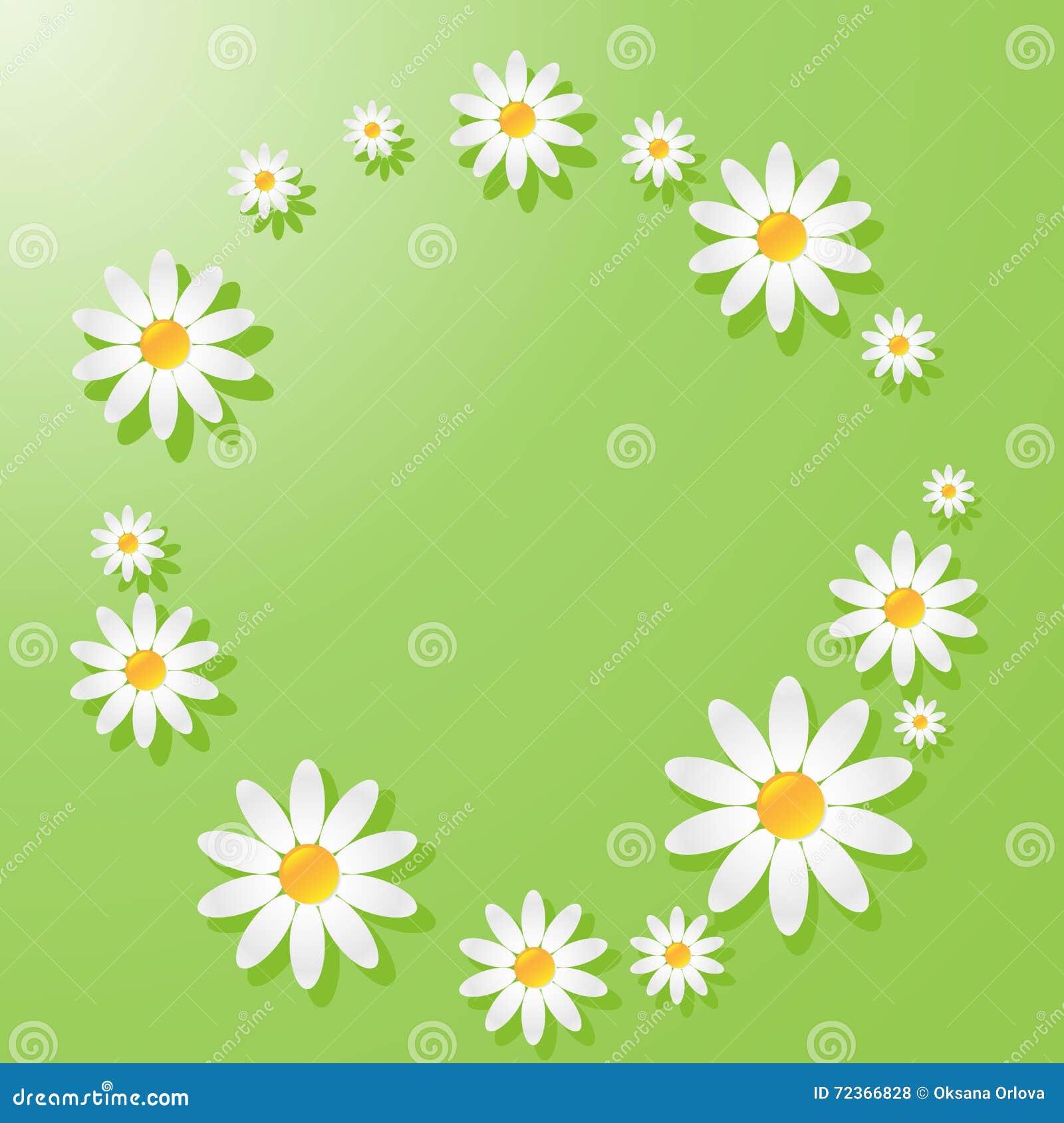 与春黄菊的绿色背景