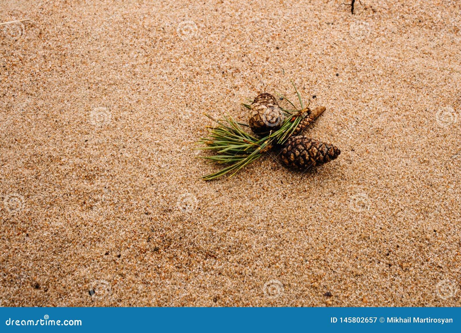 与杉木锥体的说谎在沙子的自然本底和爆沸