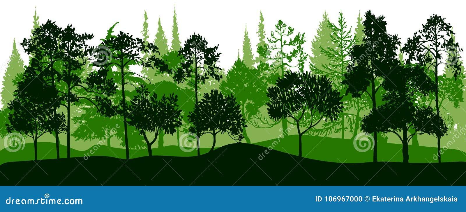 与杉树的传染媒介风景