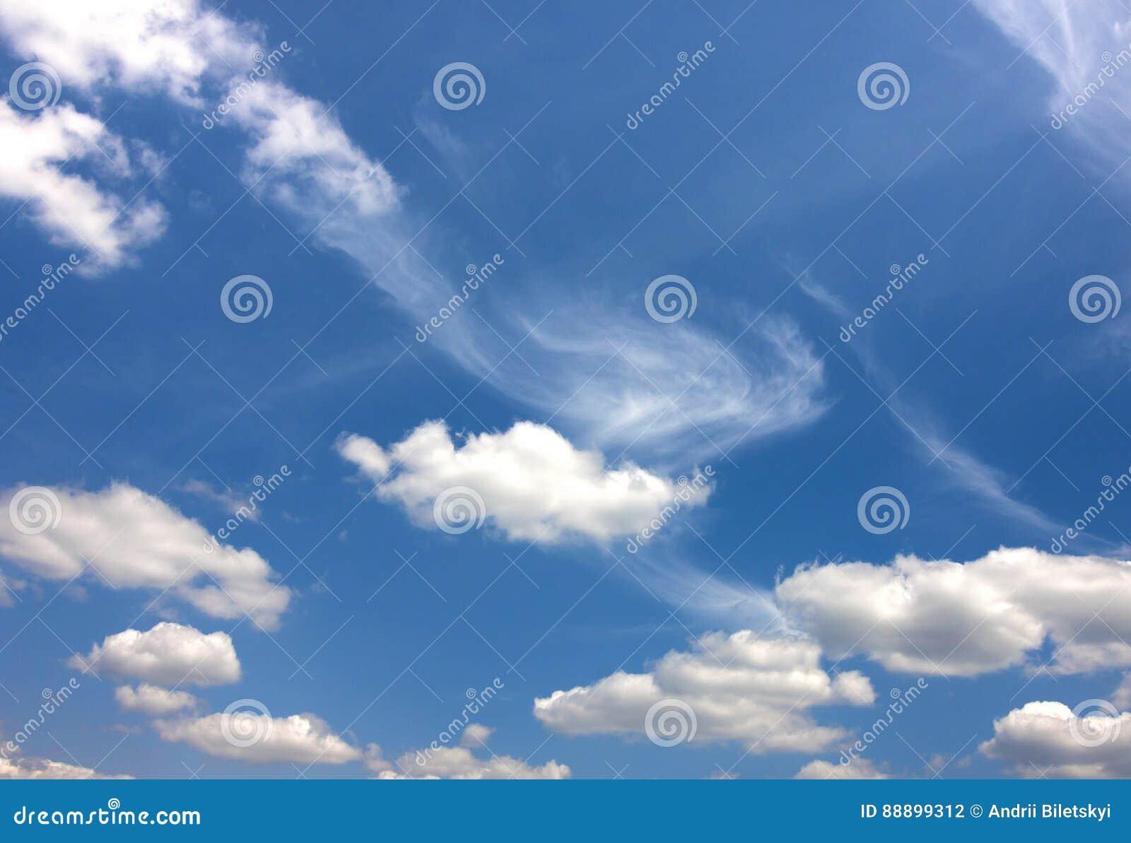 与松的白色云彩的剧烈的蓝天在明亮清楚晴朗