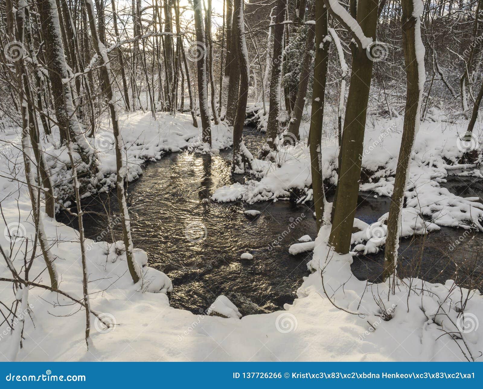 与树、分支和石头,在金黄小时太阳的田园诗冬天风景的积雪的森林水小河小河