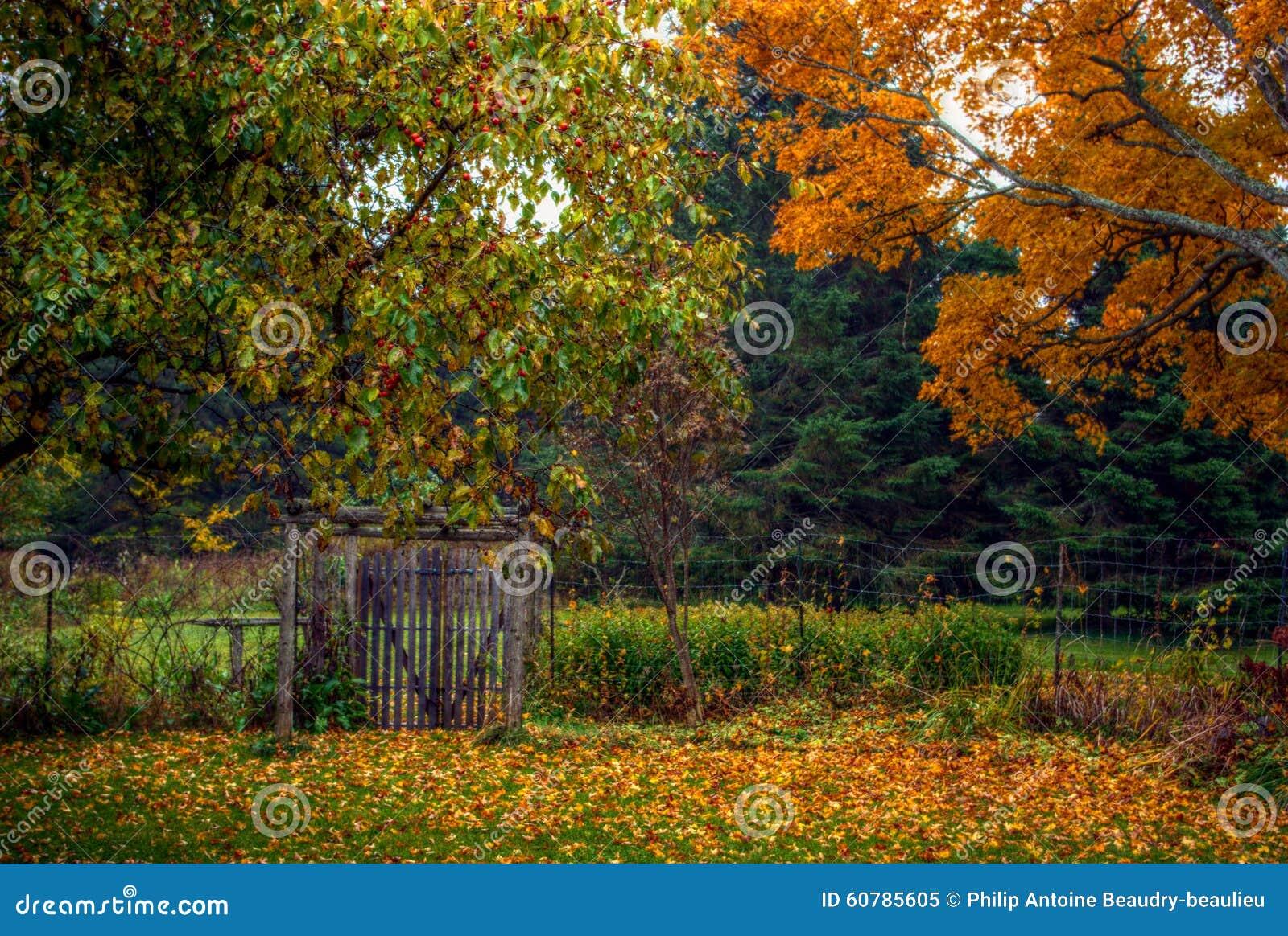 与树和土气篱芭的秋天/秋天场面
