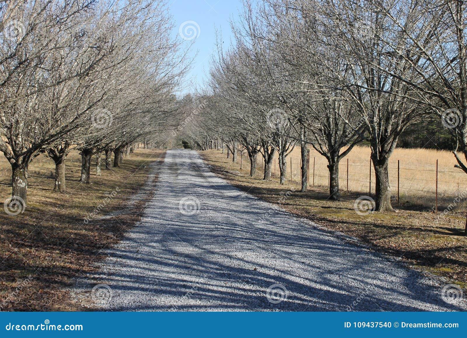 与树的美好的冬日