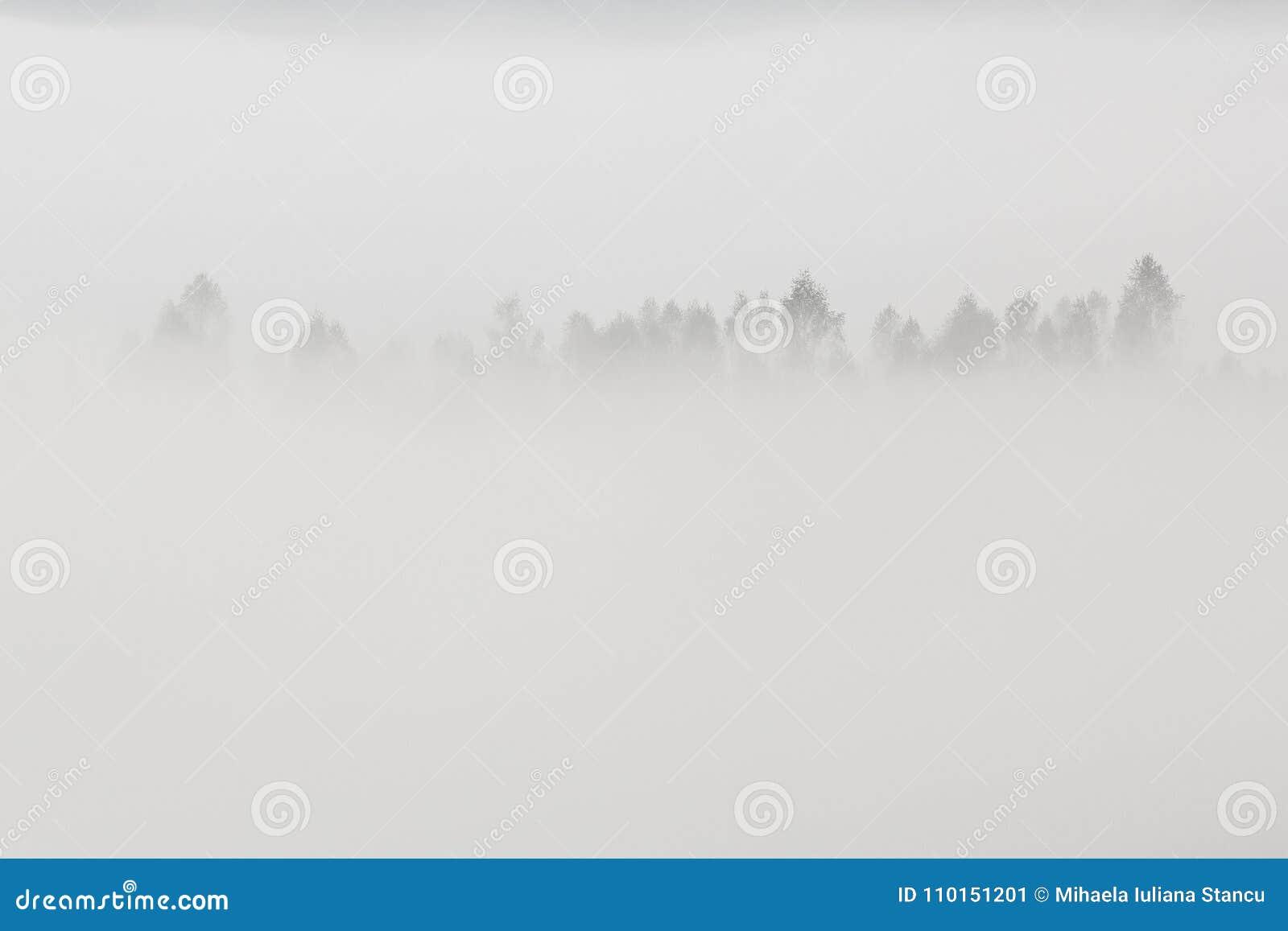 与树的美好的最低纲领派风景在白色雾冠上