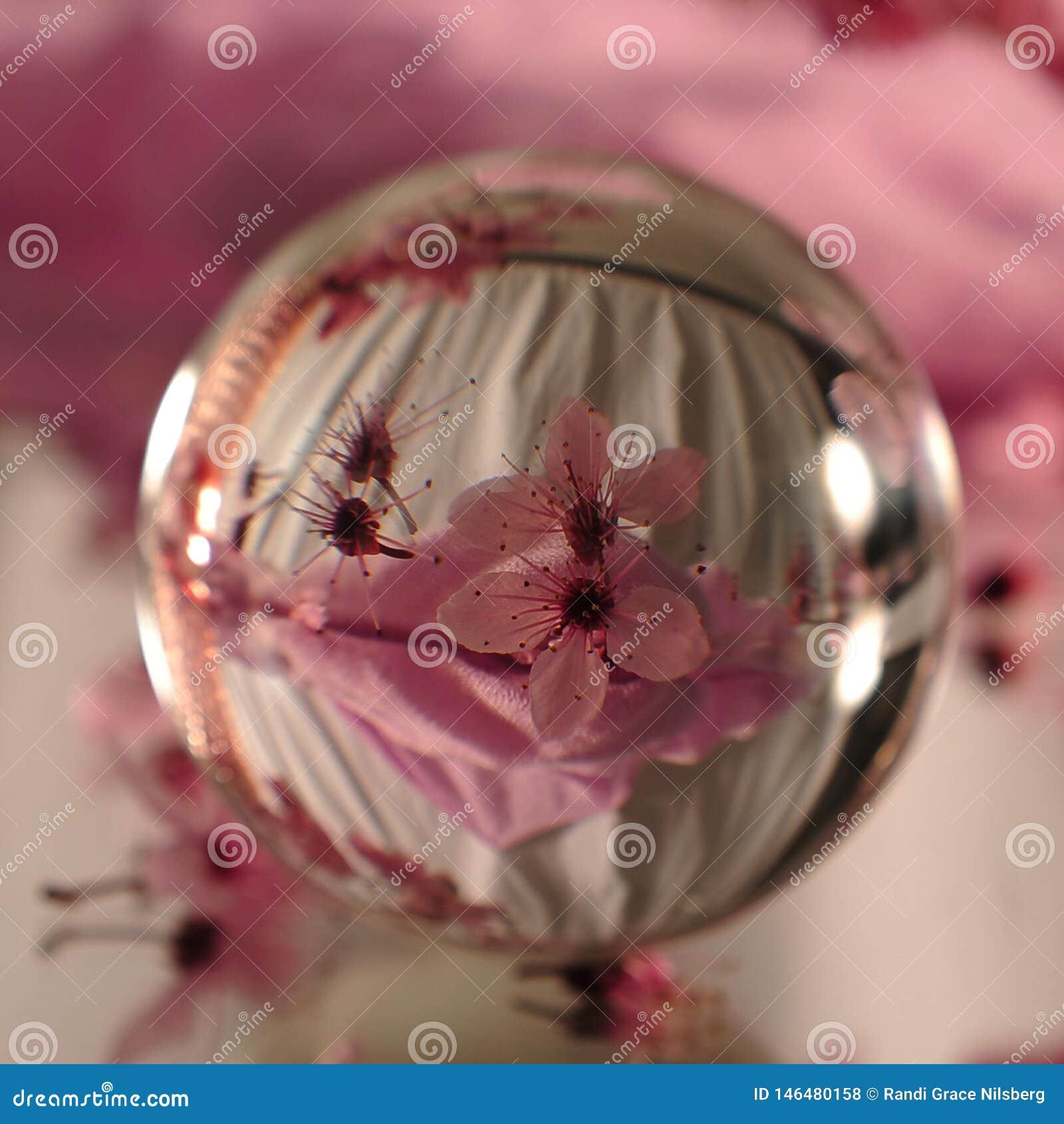 与桃红色樱桃花的透镜球