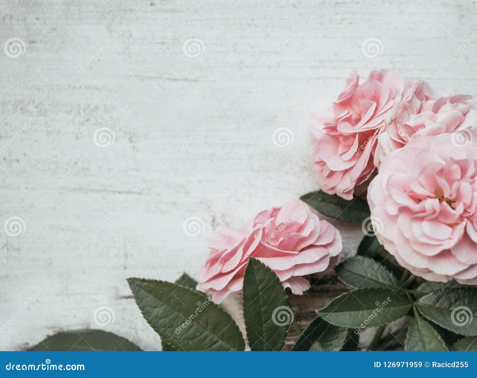 与桃红色玫瑰的情人节背景在木桌 土气,浪漫