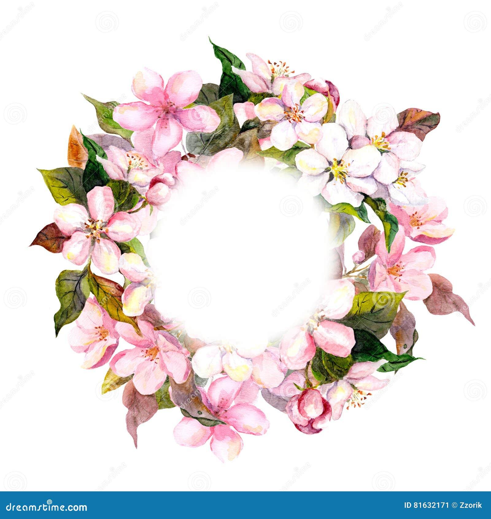 与桃红色花的花卉圆的花圈-苹果,明信片的樱花 水彩