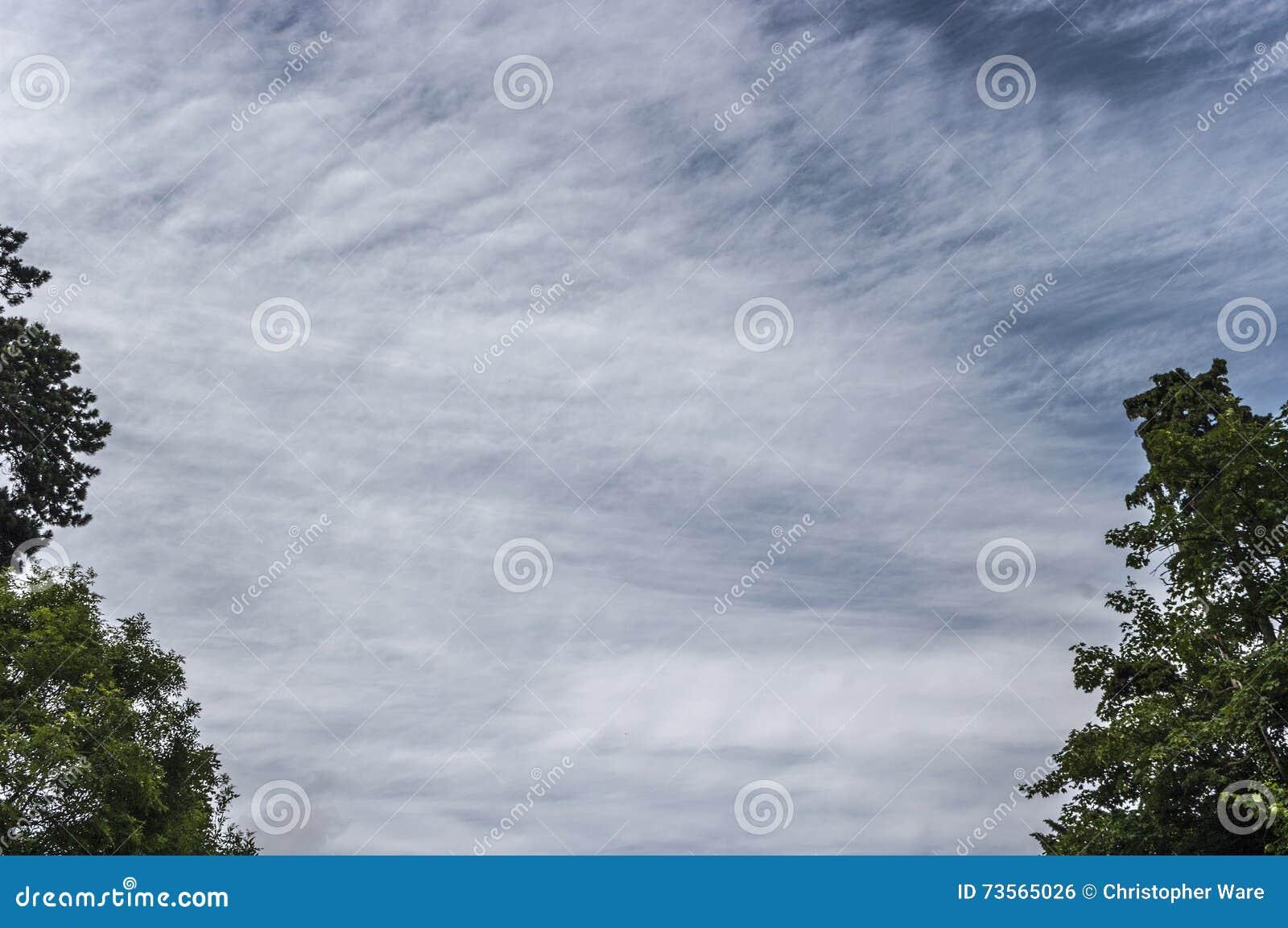与框架轻的云彩和树边缘的Skyscape