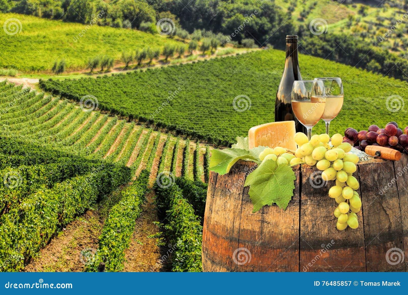 与桶的白葡萄酒在葡萄园在Chianti,托斯卡纳,意大利