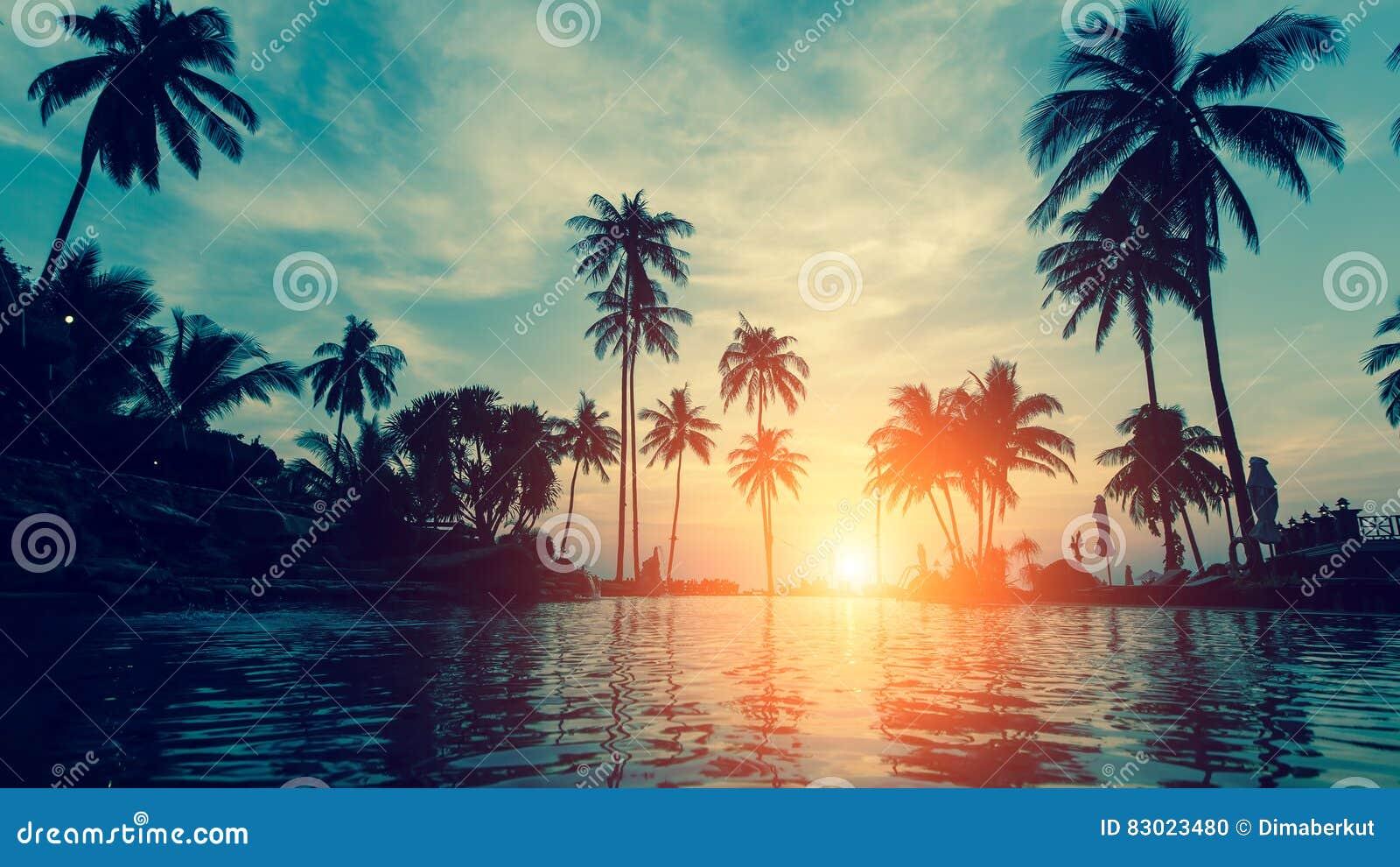 与棕榈树剪影的美丽的热带海滩在黄昏 自然