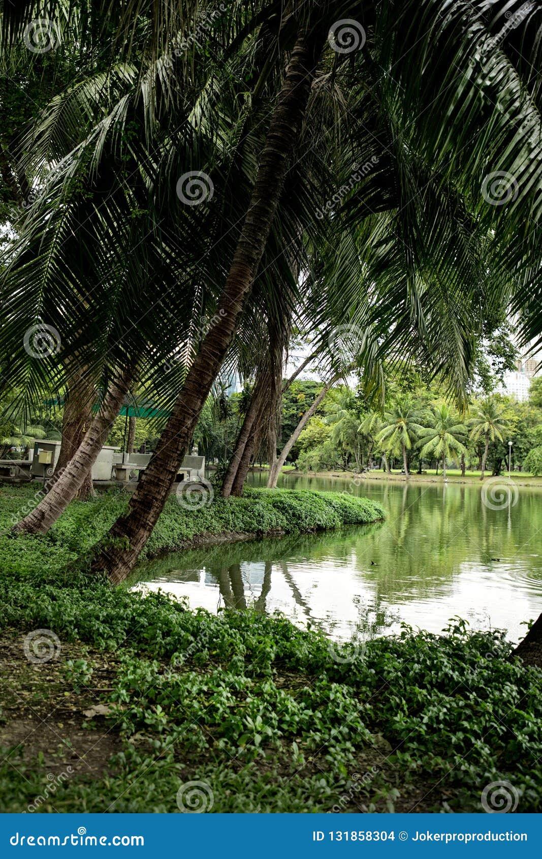 与棕榈树的湖边视图在B的Lumphini公园