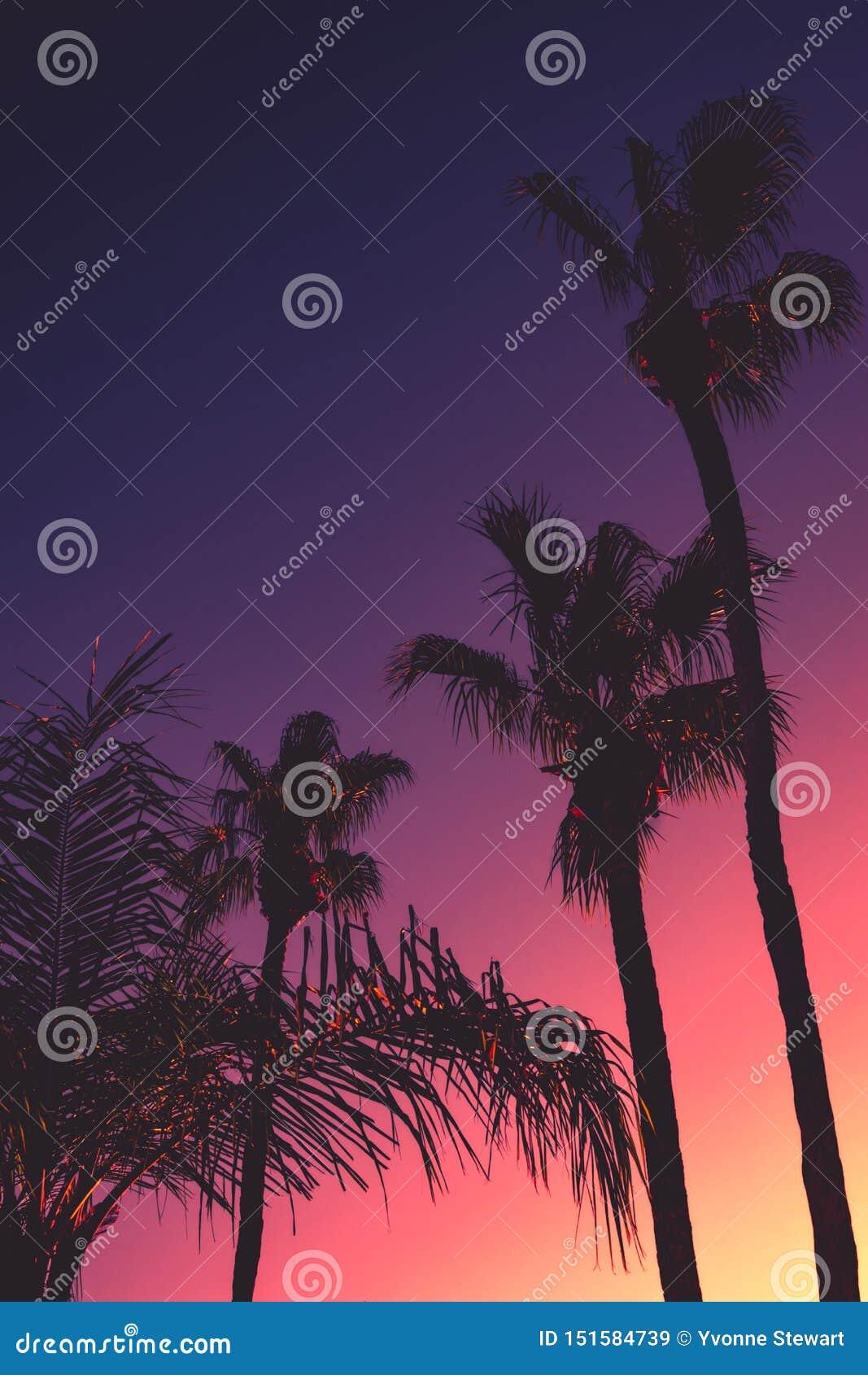 与棕榈树的热带夜背景在日落