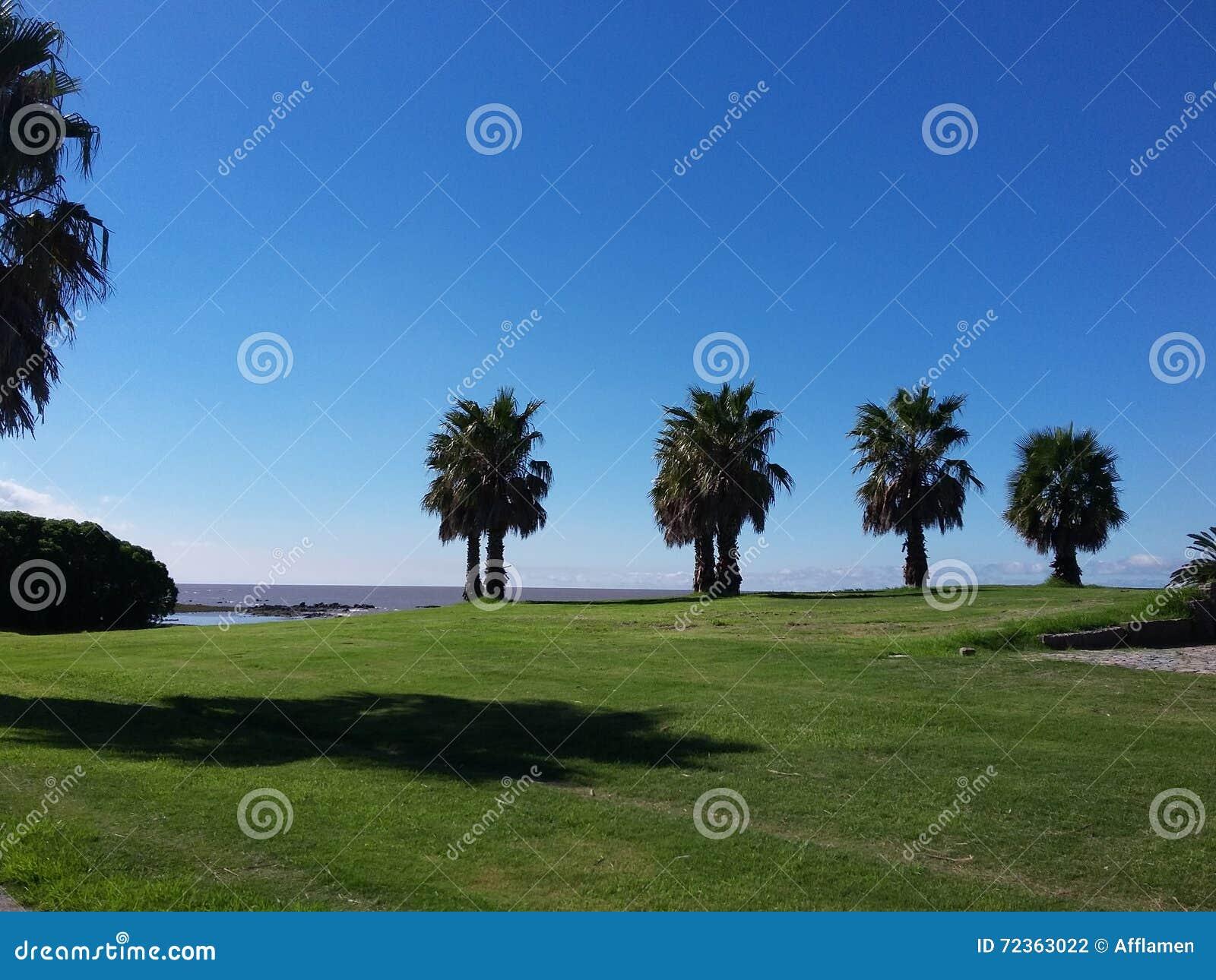 与棕榈树的风景